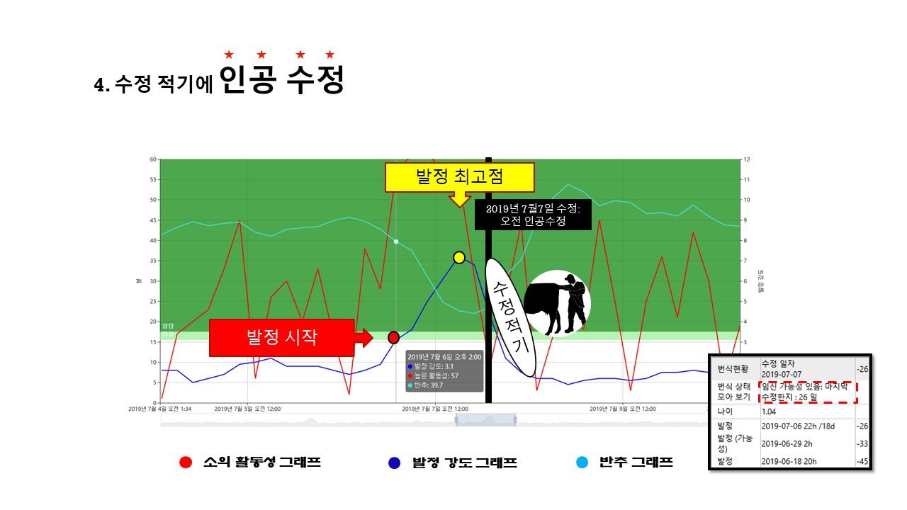 발정 온 소 찾기 수정적기.jpg